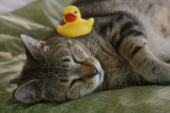 Duck  on Cowboy's Head