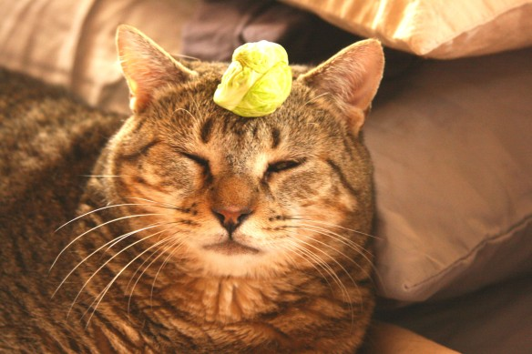 Things on Cowboy's Head - No. 11. Brussels Sprout.