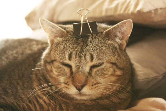 Cowboy Cat with clip on head