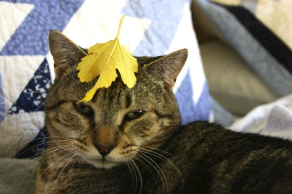 Things on Cowboy's Head. No. 14: Autumn leaf.