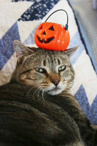 Things on Cowboy's Head No. 16: Pumpkin Basket.