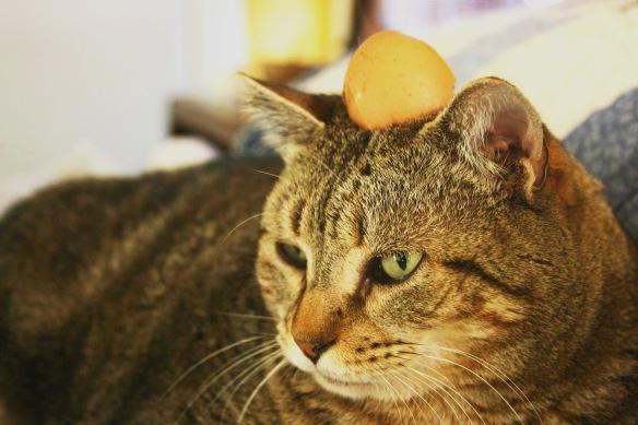 Things on Cowboy's Head. No. 21: Egg shell (half)