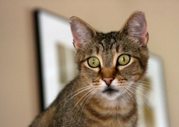 Futz Cat.