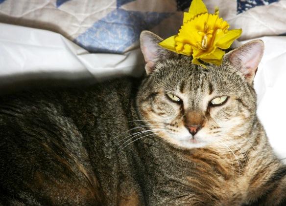 Things  on Cowboy's Head No. 27: Daffodil.