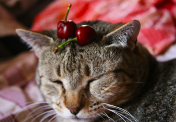 Things on Cowboy's Head No. 36: Cherries.