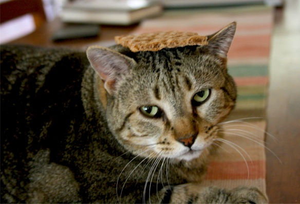 Things on Cowboy's Head No. 37: Ryvita crackerbread.