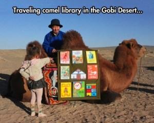 travel_camel_library_gobi