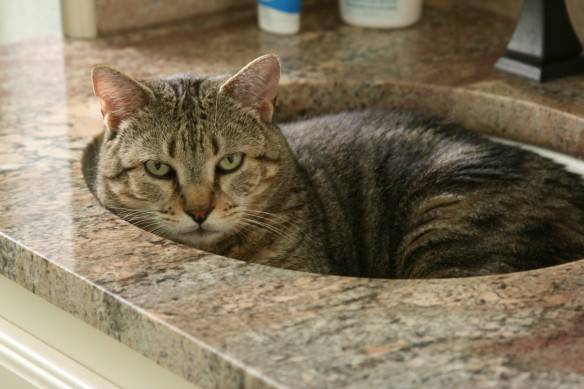 Cowboy's Head is taking a break today. She is taking a rest cure in the sink as she's been working *really* hard perfecting her nap skills.