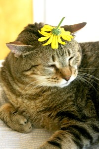 Things on Cowboy's Head. No, 45: Yellow flower from garden.