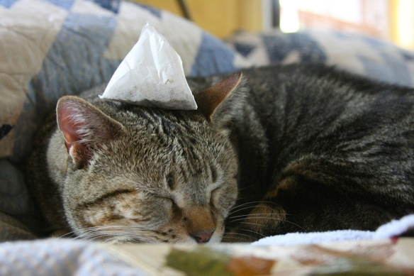 Things on Cowboy's Head. No. 44: Teabag.