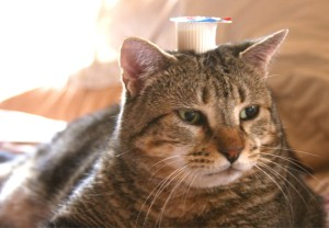 Things on Cowboy's Head. No. 52: Coffee creamer in pot.