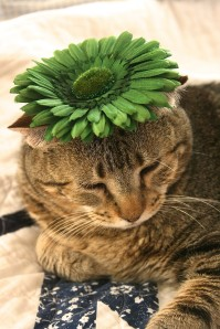 Things on Cowboy's Head. No. 55: Green flower hair grip.