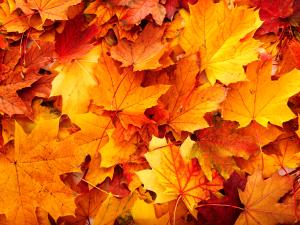 autumn1