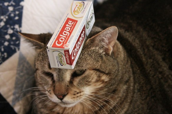 Things on Cowboy's Head No. 66: Toothpaste.
