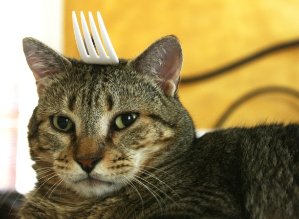 Things on Cowboy's Head. No. 69: Plastic Fork.