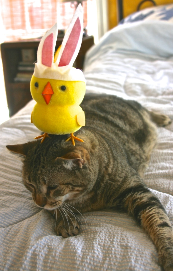 Things on Cowboy's Head No. 76: Easter chicken in disguise.