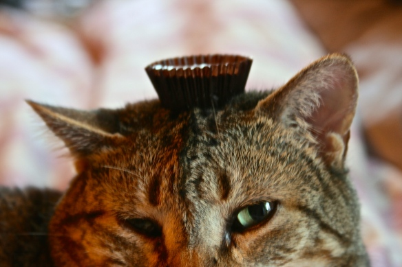Things on Cowboy's Head No. 82: Peanut butter cup candy.