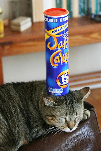Things on Cowboy's Head No. 91: Jaffa Cake box. (Empty, unfortunately.)