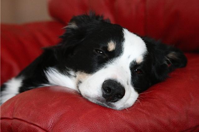 Avi Dog having a rare moment of stillness in his puppyhood.