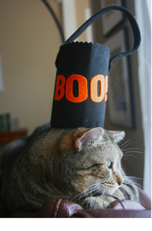 Things on Cowboy's Head No. 99: Little Halloween bucket.