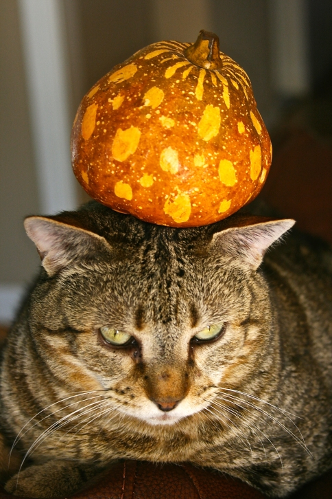Things on Cowboy's Head. No. 102: Fake Squash.