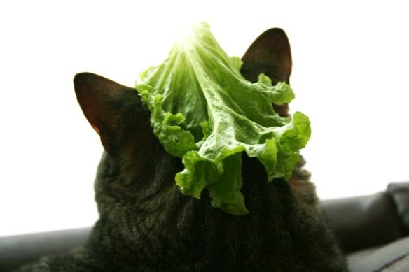 cowboy_lettuce_rev1