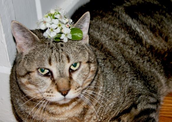 Cowboy_spring_bloom