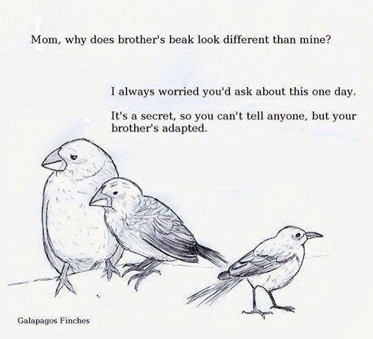 bird_pun
