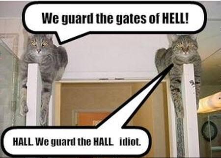 cats_hall