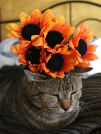 cowboy_orange_flowers