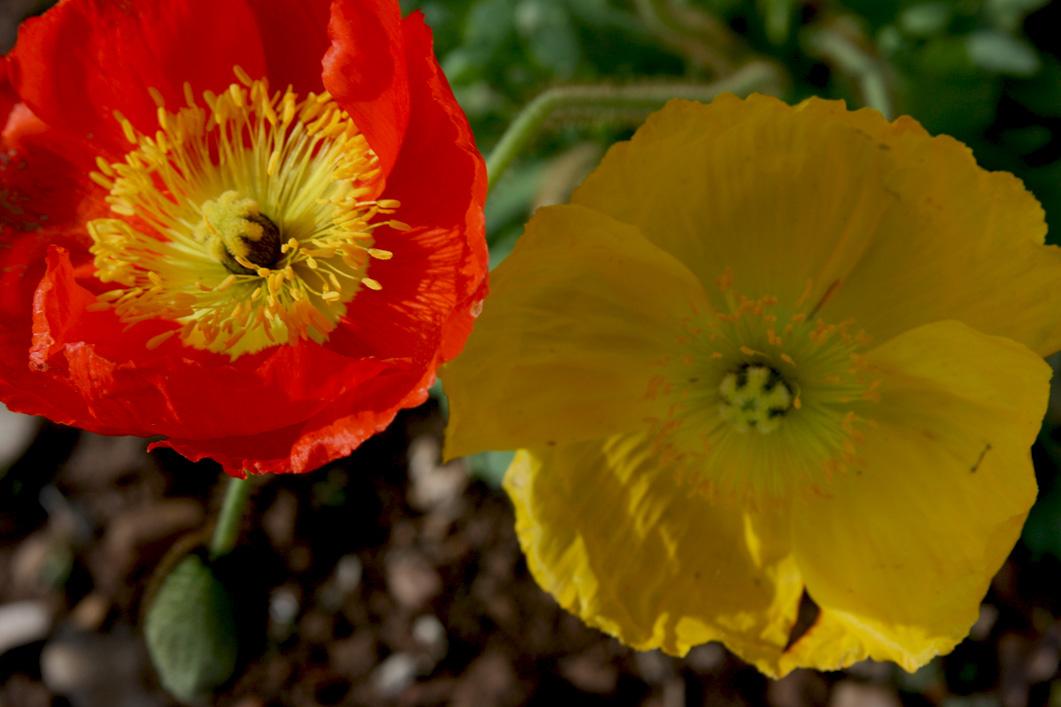 spring_Flowers_rev