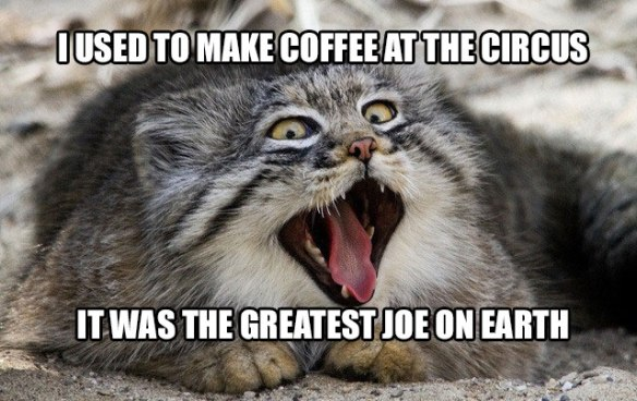 pallas-cat-coffee-pun-8