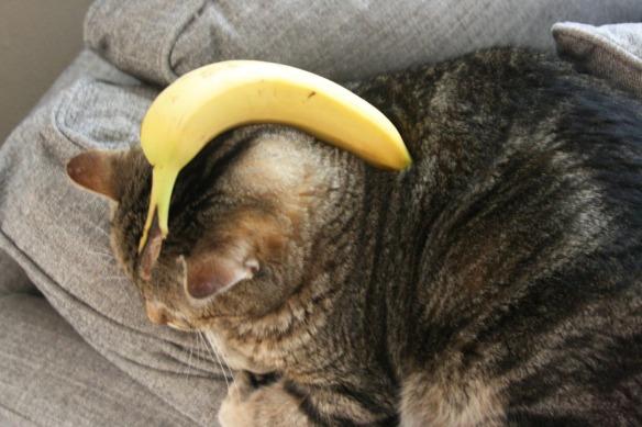 Cowboy_banana
