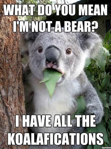 koala_pun