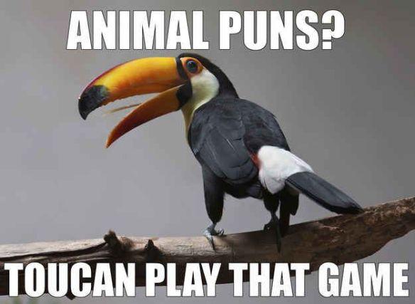 toucanpun