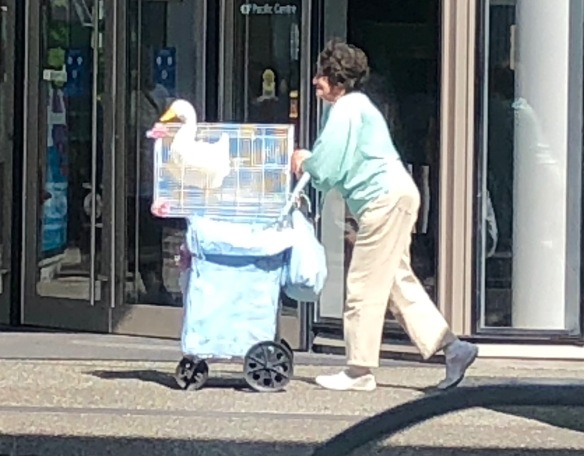 Photo of lady on Vancouver street giving her pet duck a ride on a shopping trolley.