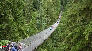 View of Capilano Suspension Bridge as it crosses the chasm below. Lots of fir trees!