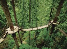 Birds-eye view of the wooden suspended path that takes you through the rainforest canopy at Capilano Bridge Park.