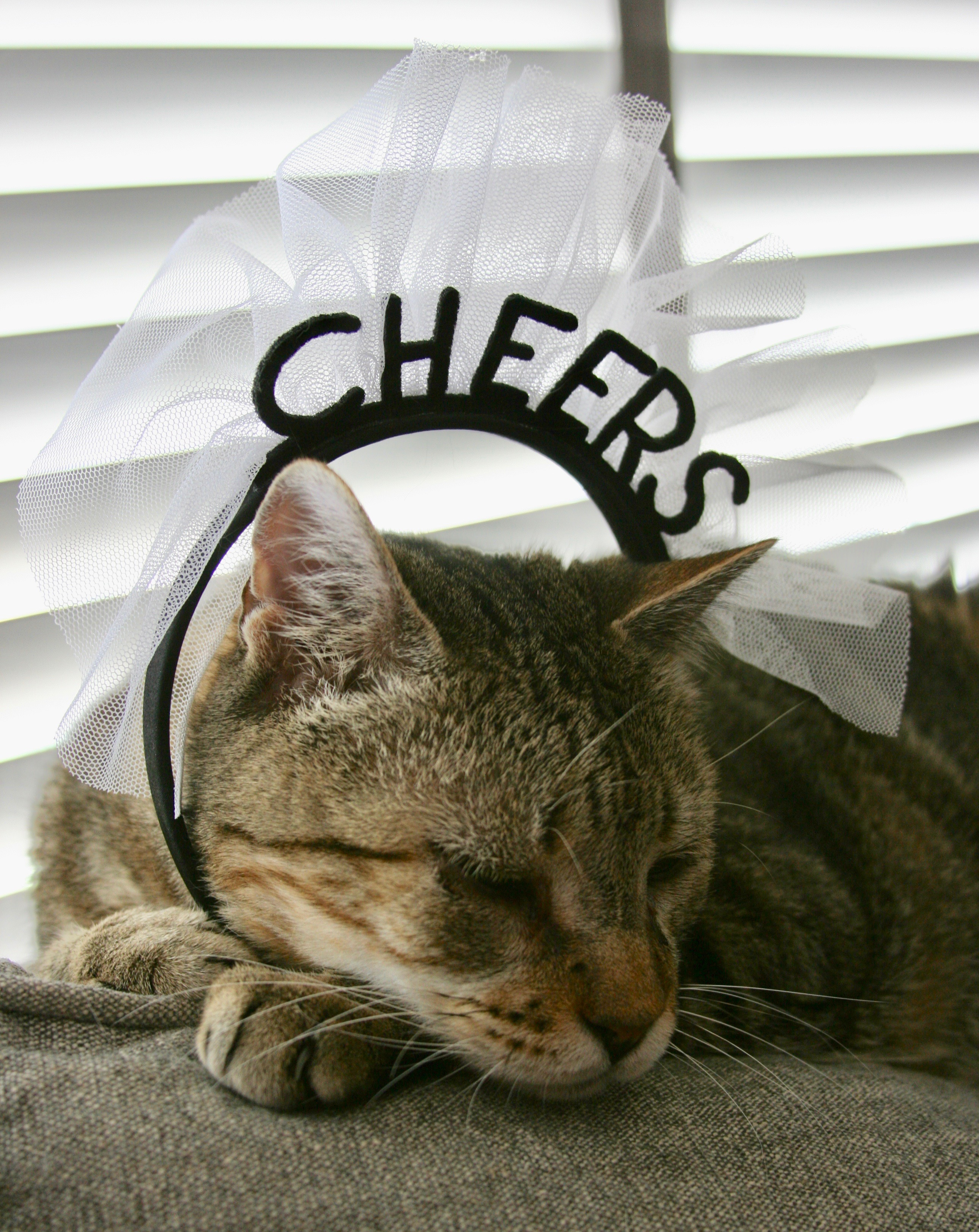 "Cowboy Cat wearing a headband which states ""Cheers""."